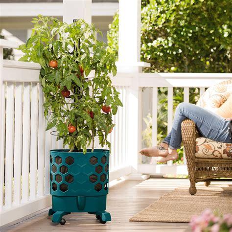 gardener s revolution self watering tomato planter with