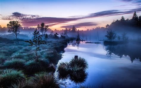 landscape nature mist sunrise trees shrubs river