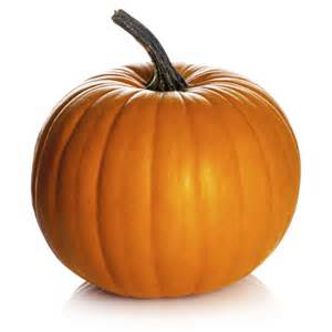 image of pumpkin pumpkin images search