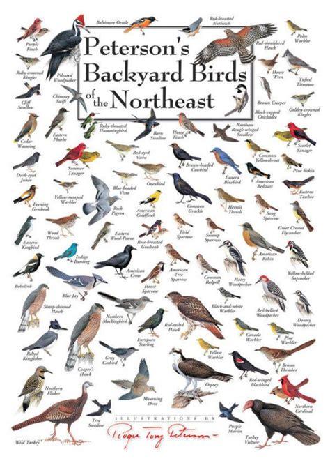 backyard bird identification guide backyard bird finder outdoor goods