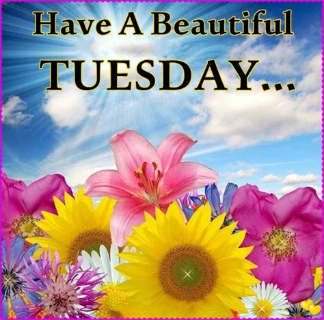 Have A Beautiful Tuesday  Pictures, Photos, and Images