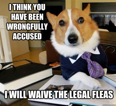 Dog Lawyer Meme - best of the lawyer dog meme 20 pics pleated jeans