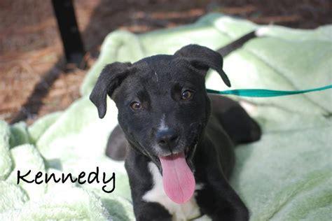 puppy rescue orlando houndhaven inc a no kill shelter near orlando florida pet rescue report