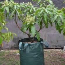 Planterbag 50 Liter Hijau planter bag tomato print 15 liter bibitbunga