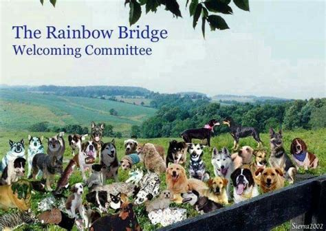 2219 best rainbow bridge images on quote 164 best rainbow bridge losing a part of our family