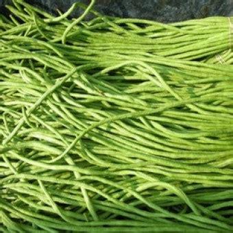 Kacang Panjang 50 Benih benih kacang panjang belanda 50 biji non retail