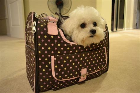 puppy in a purse my in the bag lolabears by pinkshippo on deviantart