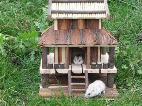 hamster house 1000 images about hamster house on pinterest