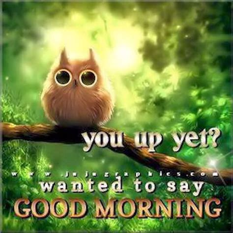 good morning quotes cute quote morning owl good morning miscellaneous pinterest good