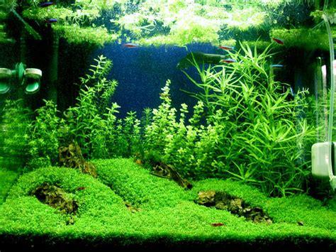 Pupuk Dasar Aquascape Alami rakus aquascape keindahan alam dalam aquarium