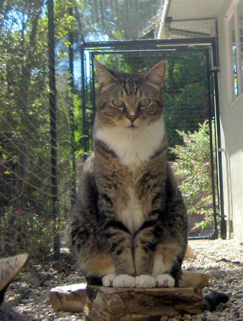 Protect From Cat by Pet Patios Help Protect Cats And Dogs From Coyotes Hawks