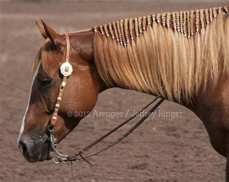 barrel racing horse hair braids braiding ideas pictures included my horse forum