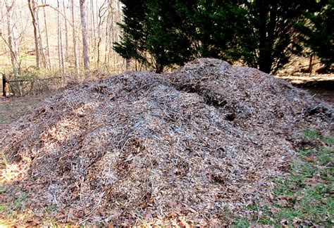 wood chips landscaping arborist wood chips mulch growing a greener world 174