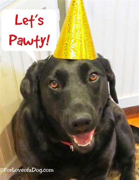 puppy singing happy birthday talking dogs at for of a happy birthday to me song saturday at talking