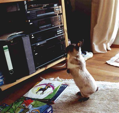 kaninchen in der wohnung halten zwergwidder kaninchen nhd 21 der erste tag mit den