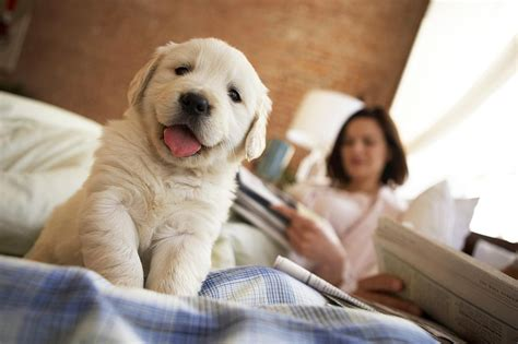how to talk to dogs how to talk to puppies with language