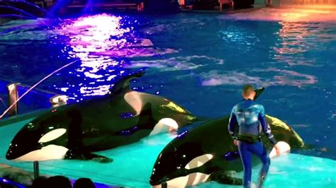 ocean scow one ocean all new shamu show seaworld orlando 2017 youtube