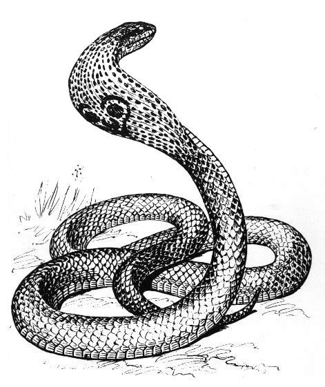 Black Master Indigo Hitam free black and white snake clipart clipart picture 16 of 28