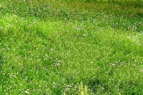 field pattern en francais images gratuites la nature herbe ch pelouse