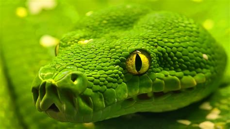 wallpaper green snake snake wallpaper hd wallpaper 327116