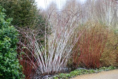 anglesey winter garden anglesey jason ingram bristol photographer
