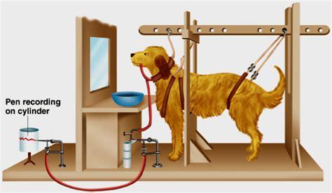 pavlov dogs psychology 2012 gt tock gt flashcards gt 3 studyblue