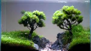 bonsai aquar箟um doovi