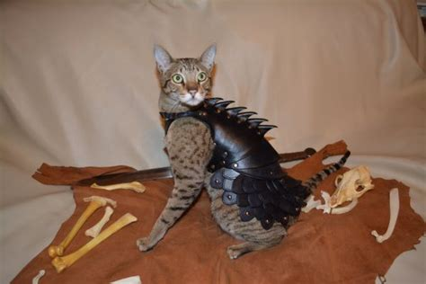 Cat Leather by Leather Battle Armor Suit For Cats Randommization