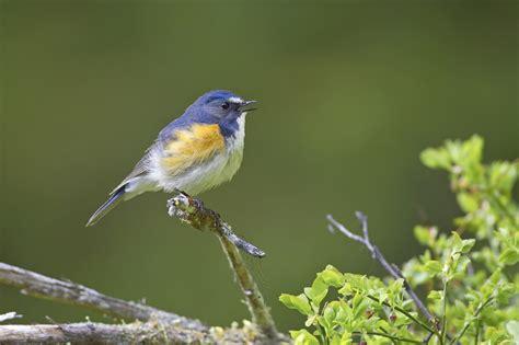 Picture Birds by Birds Of Europe Galleries Bird Pictures