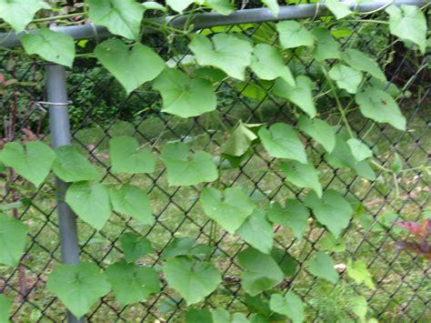 fast growing vines car interior design