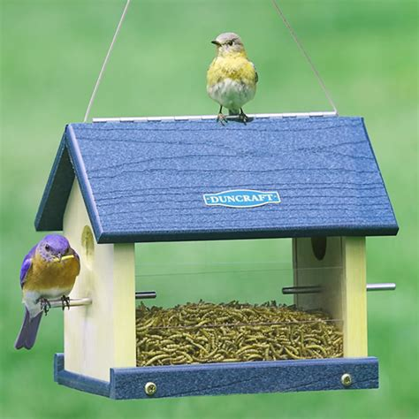 duncraft com duncraft 3004 eco strong bluebird feeder