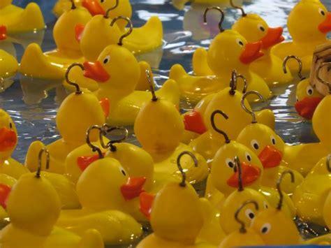 Torune S Assist Duck Family Picks gala day cancer support scotland