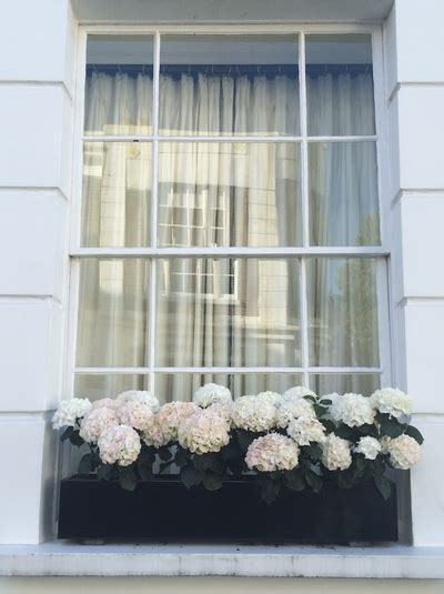 window boxes  london architectural digest