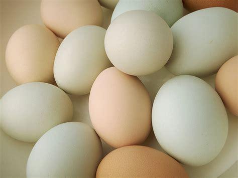 alimentazione uova alternative alle uova nella dieta
