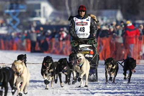 race in alaska 2016 iditarod sled race alaska s iditarod quot the last great race quot pictures