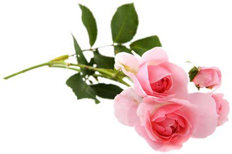 imagenes rosas sin fondo gify animacja obrazki png r 243 że png