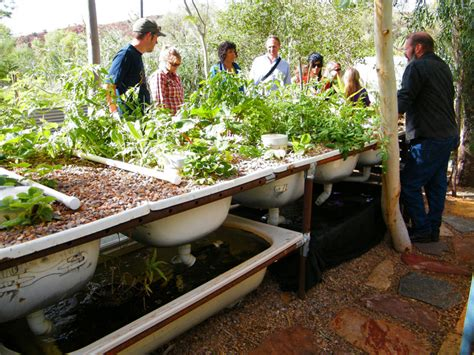 Aquaponics Backyard by Diy Everything You Need To To Build A Simple
