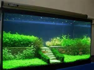 Aquascaping, Feen Terrarium and Aquarium on Pinterest