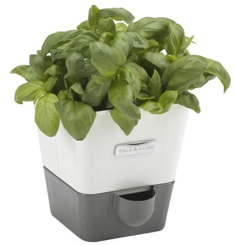 indoor self watering basil plant dying self watering planters insteading