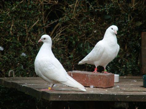 my doves january 2012
