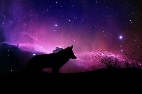 photo cosmic design space color wolf fantasy magical max pixel
