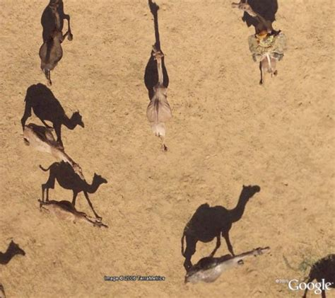 google images animals see african animals in high resolution in google earth