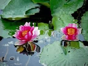bonitas imagenes gif de flores y lluvia imagenes bonitas con flores y plantas 2 170 parte cerrado