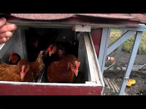 hühner außengehege stallpflicht f 252 r h 252 hner wegen der vogelgrippe freigehege