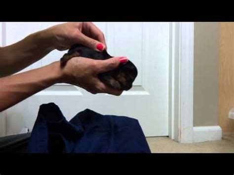 what to give a yorkie for constipation how to give a puppy a warm water doovi