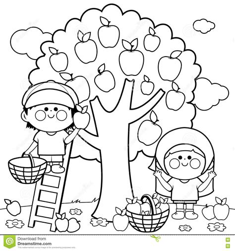 apple harvest coloring pages children harvesting apples coloring book page stock vector