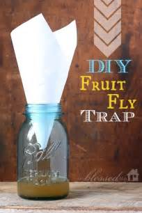 fruit flies trap daily frugal tip diy fruit fly trap couponing 101