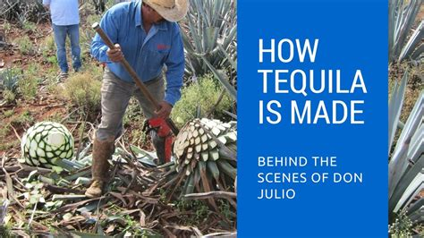 what is a made of how tequila is made the of don julio tequila