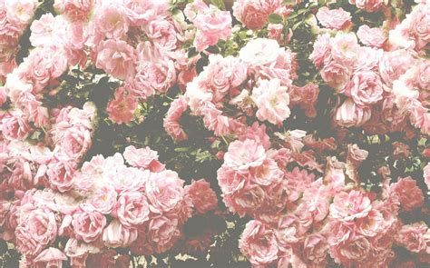 wallpaper tumblr flower flowers tumblr flower wallpaper tumblr flower wallpaper