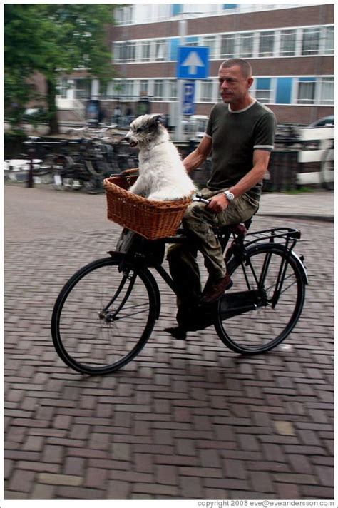bike baskets for dogs amsterdam in bike basket bicycle photo displays park